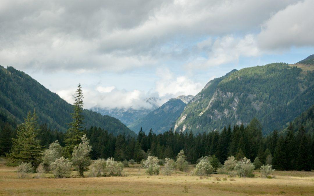 Richiesta piantine prodotte nei vivai forestali regionali. Annata silvana 2019/2020