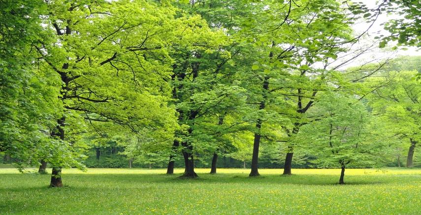 Distribuzione gratuita di piante forestali. Cambiano le modalità per partecipare all'iniziativa
