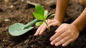 Pianta un albero! Da ottobre a dicembre 2020 lo ritiri gratuitamente